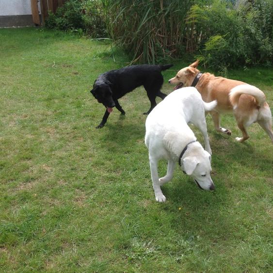 Unsere Hunde mit Gasthündin Sue