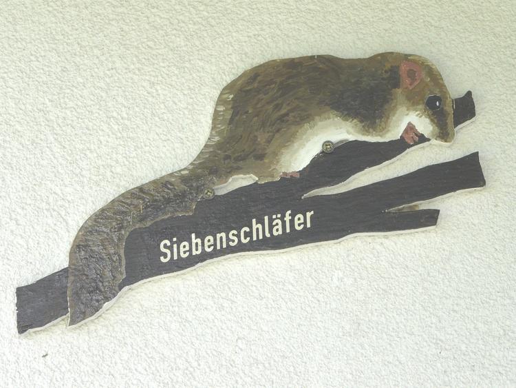 Im Siebenschläfer-Nest willkommen