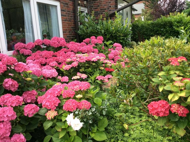 Lieblingsblumen im Vorgarten