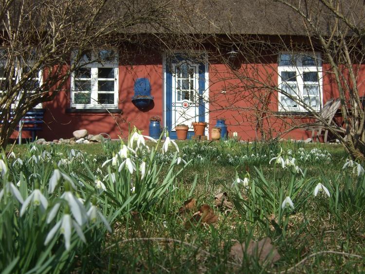 Schneeglöckchen läuten den Frühling ein.
