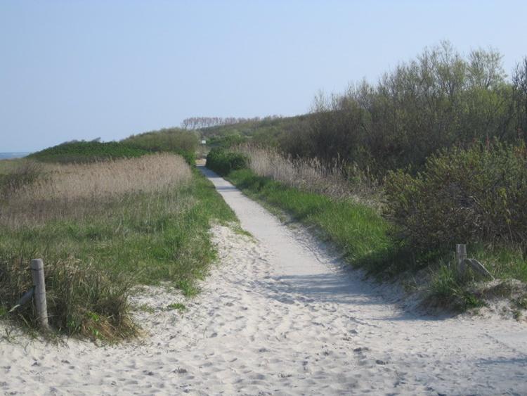 Radweg Richtung Ahrenshoop