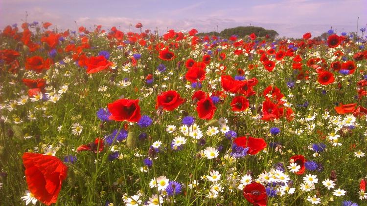 Feldblumen auf dem Weg zum Strand