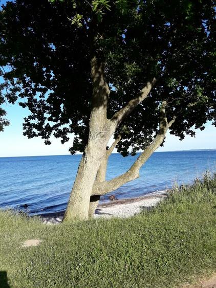 Die Ostseeküste bietet eine perfekte Landschaft für Fussgänger und Radfahrer