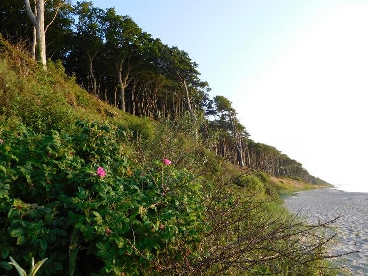 Der nahegelegene Gespensterwald am Steilhang und Blick über den Strand