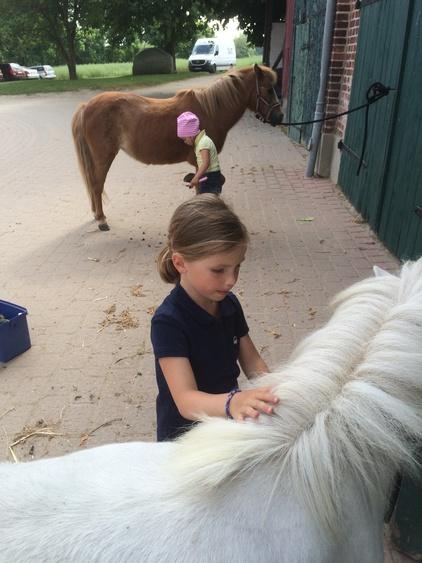 Streicheleinheiten für die Familien-Ponys