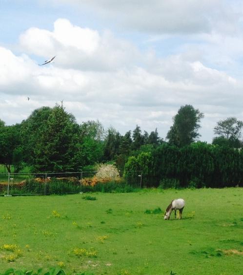 Besuch vom Storch