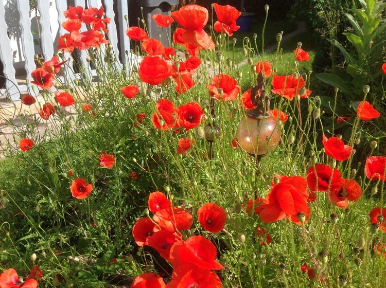 Juni im Garten